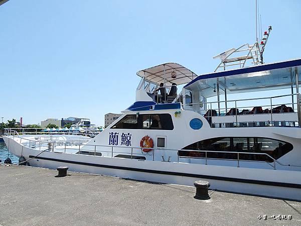 龜山島賞鯨2合139.jpg