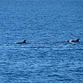 龜山島賞鯨2合141.jpg