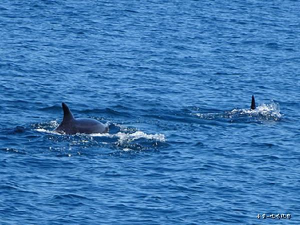 龜山島賞鯨2合142.jpg