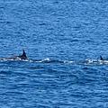 龜山島賞鯨2合143.jpg