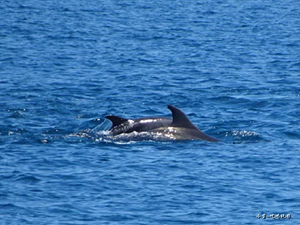 龜山島賞鯨2合144.jpg