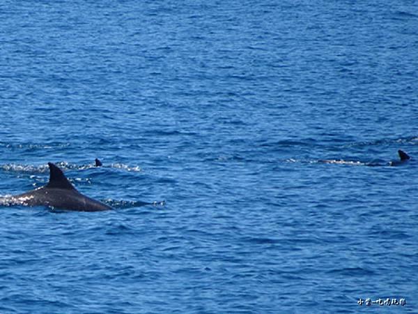 龜山島賞鯨2合145.jpg