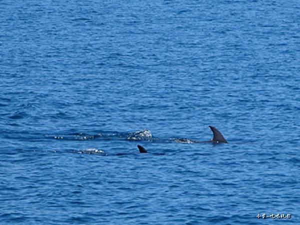 龜山島賞鯨2合147.jpg