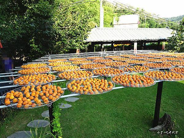金漢柿餅教育農園2.jpg