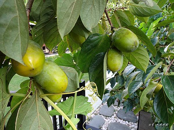 金漢柿餅教育農園3.jpg