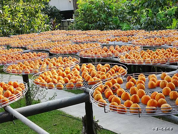 金漢柿餅教育農園5.jpg