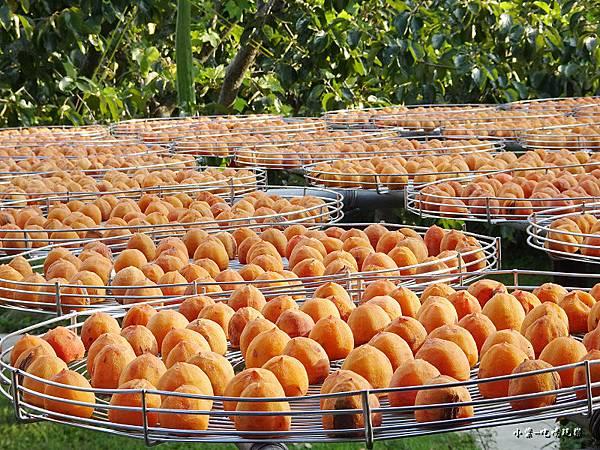 金漢柿餅教育農園6.jpg