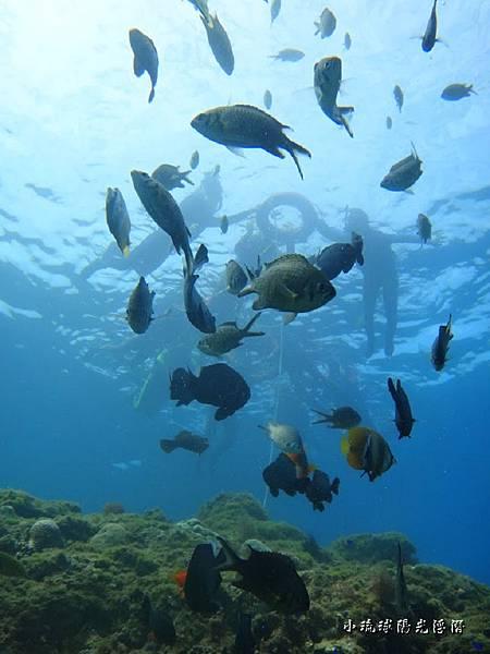 海底世界71.jpg