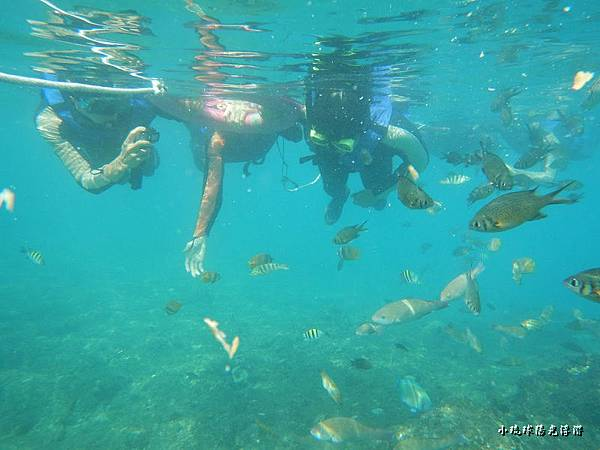 海底世界101.jpg