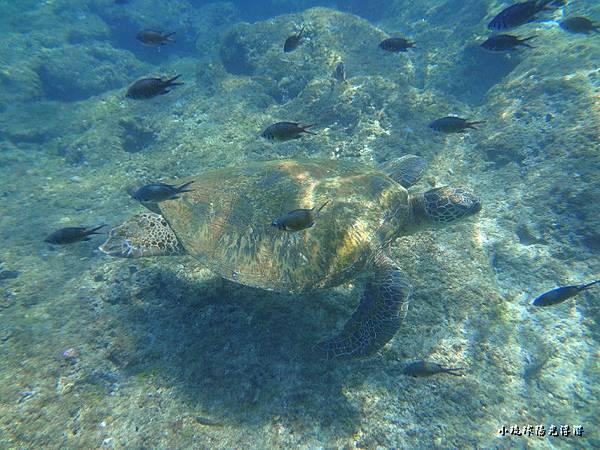 海底世界134.jpg