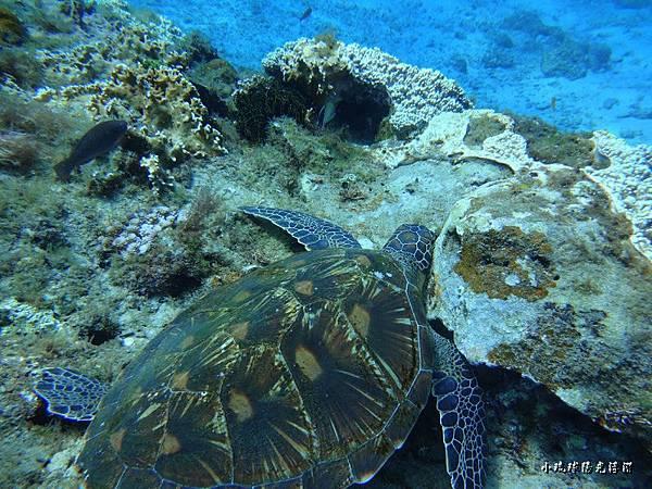 海底世界187.jpg