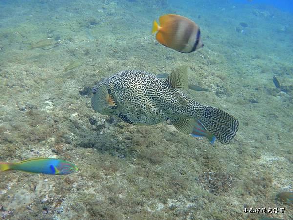 海底世界218.jpg