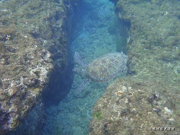 海底世界229.jpg