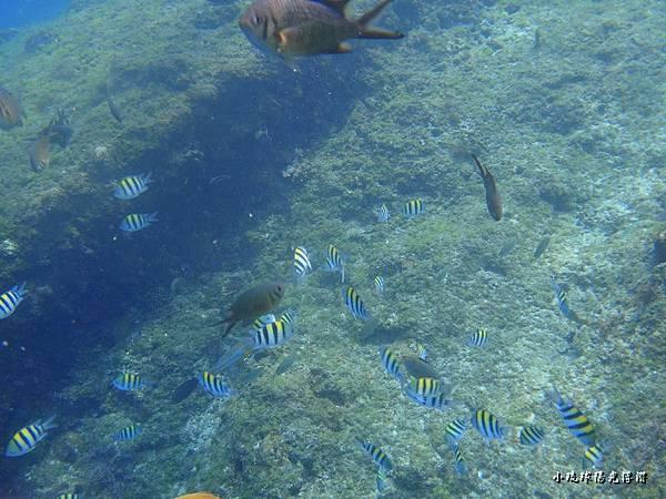 海底世界515.jpg
