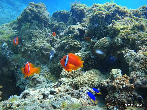 海底世界616.jpg