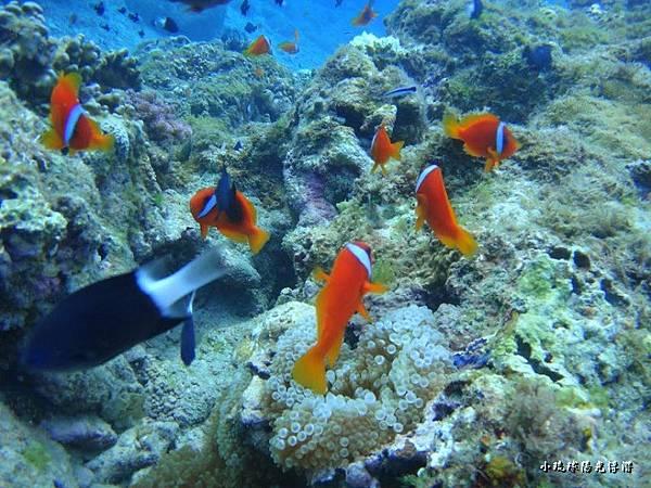 海底世界2310.jpg