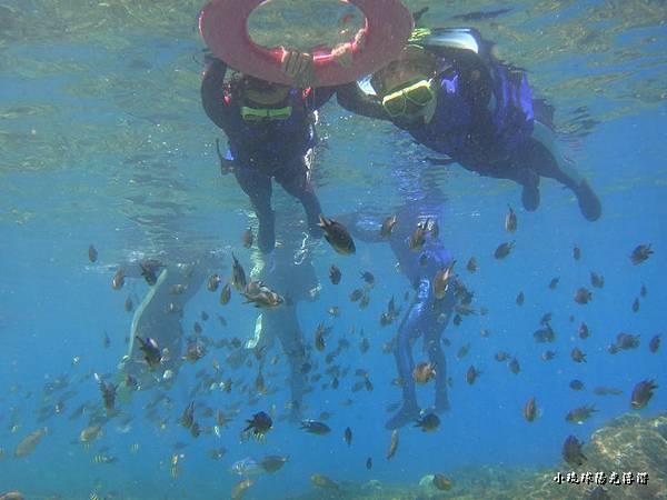 海底世界2612.jpg