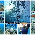 海底世界-陽光浮潛.jpg