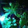 夜間生態導覽 (1)0.jpg