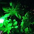 夜間生態導覽 (20)5.jpg
