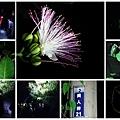 夜間生態導覽 -鳥植物.jpg