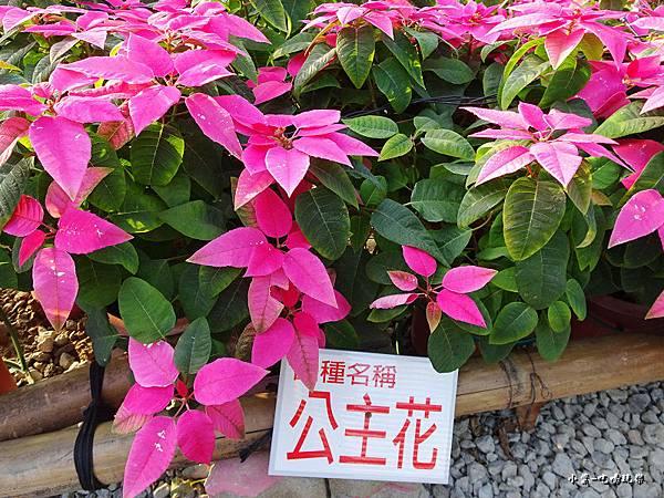 三民山城紅花燈火節4.jpg