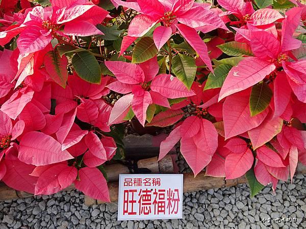三民山城紅花燈火節8.jpg