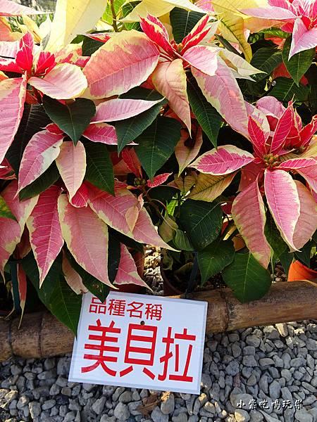 三民山城紅花燈火節13.jpg