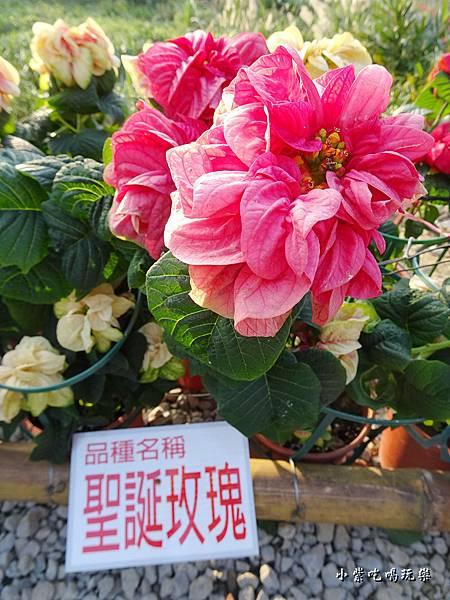 三民山城紅花燈火節15.jpg