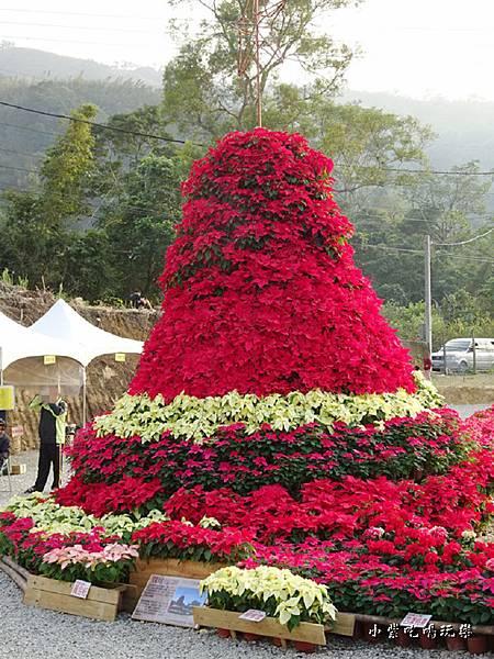 聖誕紅耶誕樹 (1)2.jpg