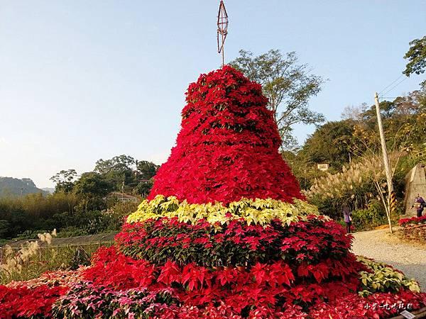 聖誕紅耶誕樹 (2)2.jpg
