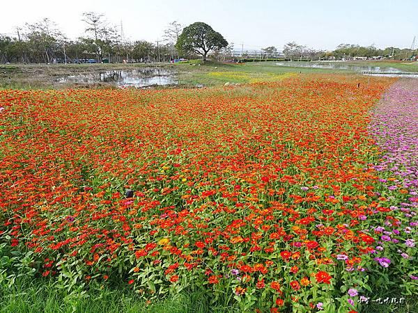 台中國際花毯節8.jpg