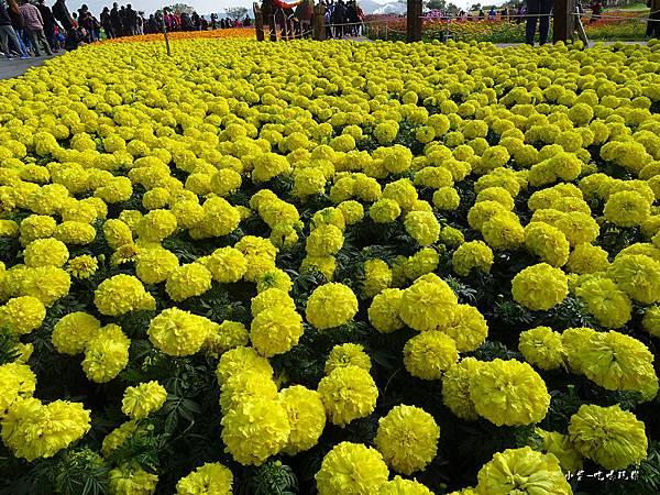台中國際花毯節39.jpg