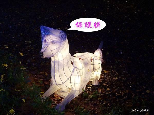 宜蘭賞花燈-員山公園16.jpg