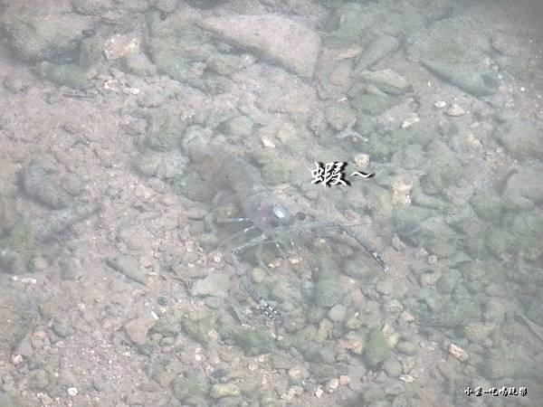小琉球鳥鬼洞15.jpg