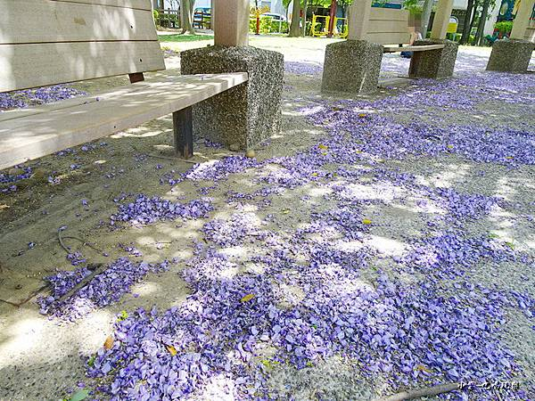 龍德公園紫藤花季3.jpg