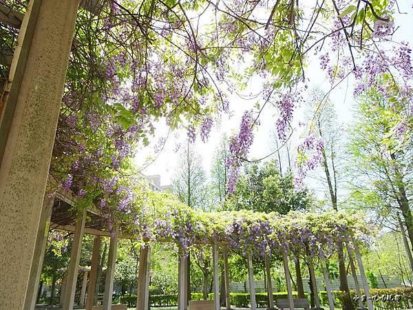 龍德公園紫藤花季4.jpg