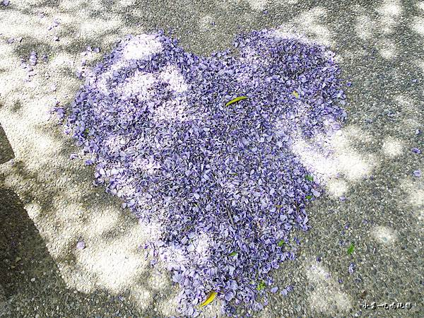 龍德公園紫藤花季7.jpg