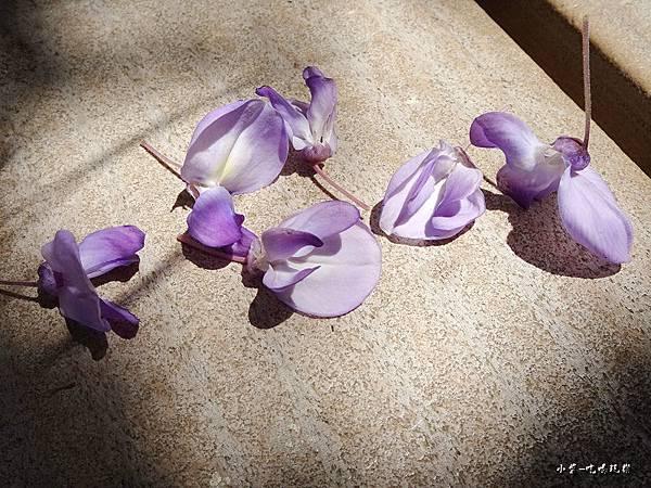 龍德公園紫藤花季11.jpg