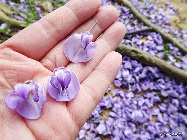 龍德公園紫藤花季18.jpg