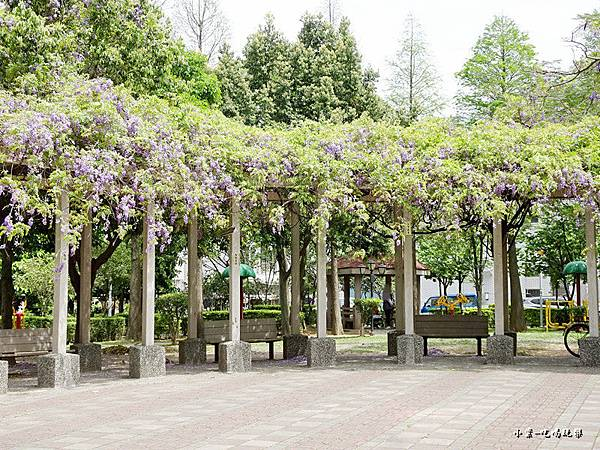 龍德公園紫藤花季20.jpg