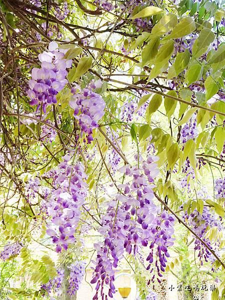 龍德公園紫藤花季24.jpg