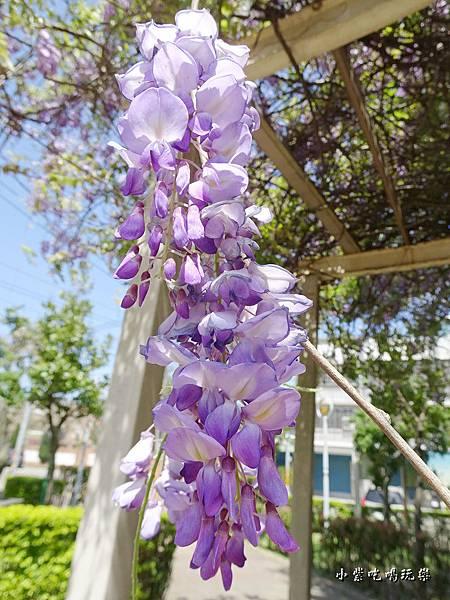 龍德公園紫藤花季27.jpg