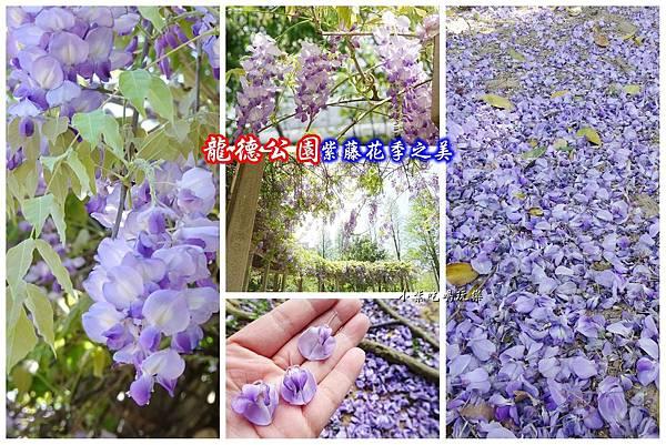 龍德公園紫藤花季首圖.jpg
