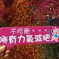 喵匠靜宜店 (11)34.jpg