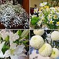 新鮮花朵.jpg