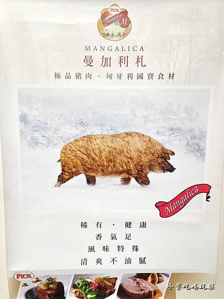 曼加利札國寶豬.jpg