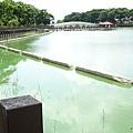 天鵝湖水上公園 (3).jpg
