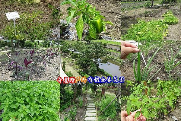 奇麗灣有機菜園.jpg