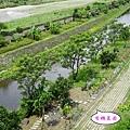 菜園 (2).jpg